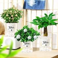 文竹室内盆栽植物好养花卉发财树茉莉花绿萝富贵竹办公室多肉绿植