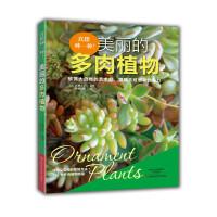 真想种一种!美丽的多肉植物
