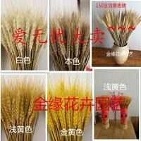 真麦穗干花花束开业大麦田园装饰礼品礼盒拍摄道具干花真花麦子