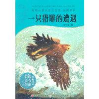 动物小说大王沈石溪・品藏书系:一只猎雕的遭遇