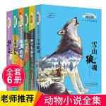 沈石溪动物小说系列野生动物救助站全套6册 安徽少年儿童出版社
