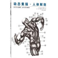 动态素描. 人体解剖