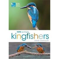 预订RSPB Spotlight Kingfishers