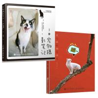 皇城猫语+宠物摄影笔记