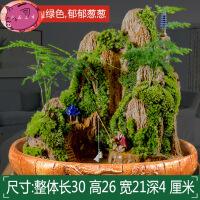 清香木盆栽 悬崖式造景植物山水假山 造石室内树桩造型 绿植老桩盆景 带盆栽好