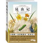 昆虫记(第6卷)――全译插图珍藏本