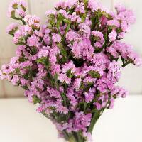 勿忘我干花摆件真花礼物鲜花客厅装饰花家庭插花永生花 粉红色 勿忘我300g