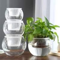 水培植物瓶透明玻璃花瓶容器绿萝花盆圆球形鱼缸水养小号器皿