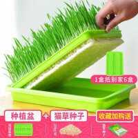 新款猫草水培猫草种子套装猫零食去毛球猫草种籽猫薄荷猫草种植盆