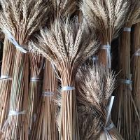 自然麦穗花束商场大麦田园装饰礼品拍摄道具真花麦子落地