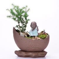 紫砂花盆多肉花盆菖蒲个性创意组合摆件小盆景手工文竹古典盆