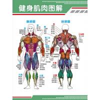新品健身肌肉图解挂图贴画人体肌肉结构解剖*解剖图示意图海报