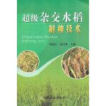 超级杂交水稻制种技术