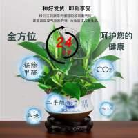 绿公主盆栽招财植物金钻办公室内好养四季常青吸甲醛花卉桌面绿植