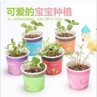 创意办公室桌面迷你绿植盆栽室内绿色植物花卉小盆栽摆件
