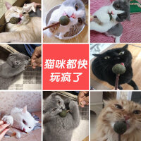 猫薄荷球洁齿棒棒糖猫咪用品逗猫玩具自嗨逗猫棒耐咬木天蓼磨牙棒