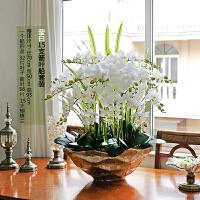 现代手感仿真蝴蝶兰套装绿植盆栽花艺室内客厅摆设装饰假花卉 乳白色 15支莹白大船金盆