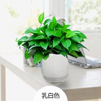 新品可弹琴智能音乐花瓶迷你创意蓝牙音箱盆栽插花瓶植物音响触摸 套餐一