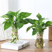 简约创意风信子水培玻璃花瓶透明水养植物绿萝花盆居家插花小清新3个装 中等