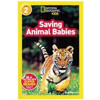 英文原版绘本National Geographic Kids Level2:Saving Animal Babies 国