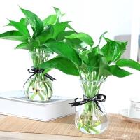 水培绿萝玻璃花瓶透明植物风信子客厅插花创意花盆器皿家用小摆件 中等