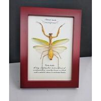 【新品优选】真蝴蝶标本昆虫标本螳螂学生礼品科普教具收藏品 其他长方形尺寸 独立