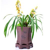 紫砂陶瓷兰花花盆盆景盆栽桌面地面阳台花盆带托六方盆景盆