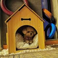 狗狗泰迪型狗屋室外室内户外冬天保暖用狗房子小型犬防雨